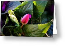 Geranium Bud Greeting Card