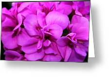 Geranium I Greeting Card