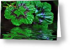 Geranium Leaves - Reflections On Pond Greeting Card