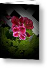 Geranium Greeting Card