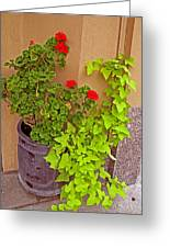 Geraniums And Ivy Greeting Card