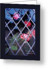 Geraniums Under Glass In Wales Greeting Card