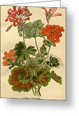 Geraniums Greeting Card by Philip Ralley