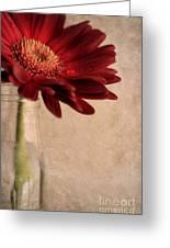 Gerber 02 Greeting Card