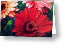 Gerber Daisies In Bloom Greeting Card