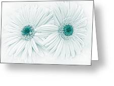 Gerber Daisy Flowers In Teal Greeting Card