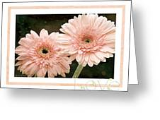 Gerber Daisy Love 5 Greeting Card