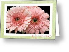 Gerber Daisy Peace 4 Greeting Card