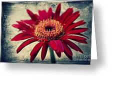 Gerbera Greeting Card by Angela Doelling AD DESIGN Photo and PhotoArt