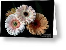 Gerbera Daisy   7302 Greeting Card