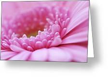 Gerbera Daisy Flower - Pink Greeting Card by Natalie Kinnear