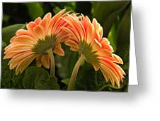 Gerbera Daisy Twins Greeting Card