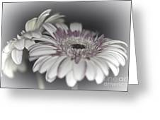 Gerbera Dream 1 Greeting Card