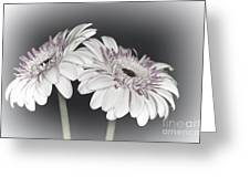 Gerbera Dream 2 Greeting Card