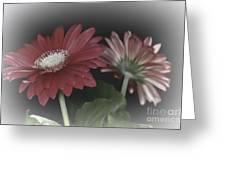 Gerbera Dream 3 Greeting Card