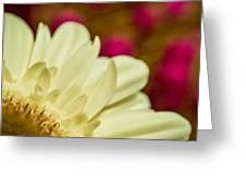 Gerbera Fantasy Greeting Card