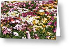 Gerbera Flowers Greeting Card