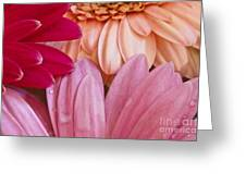 Gerbera Impressions Greeting Card