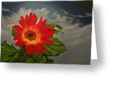 Gerbera Melange Daisy Greeting Card