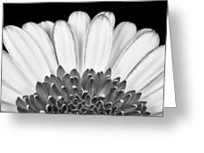 Gerbera Rising Greeting Card