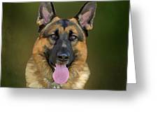 German Shepherd Portrait II Greeting Card