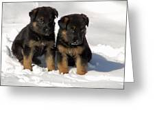 German Shepherd Pups Greeting Card by Aimee L Maher Photography and Art Visit ALMGallerydotcom