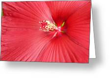 Getting Intimate With China Rose Greeting Card