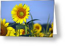 Getting To The Sun Greeting Card