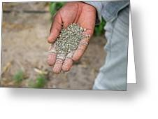 Ghanzi, Botswana- Fertilizer Pellets Greeting Card
