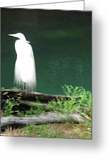 Ghost Bird Greeting Card