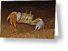 Ghost Crab 6 11/01 Greeting Card