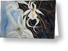 Ghost Orchid Blooming Greeting Card