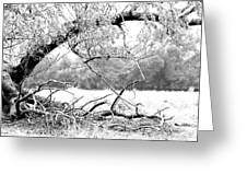 Ghost Tree 1 Of 3 Greeting Card