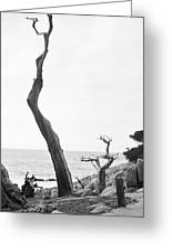 Ghost Tree Site Greeting Card