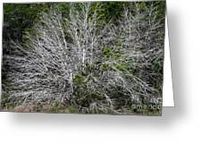 Ghost Trees Greeting Card