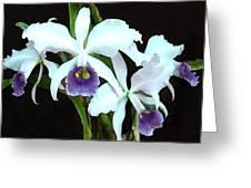 Ghostly Cattleyas Greeting Card