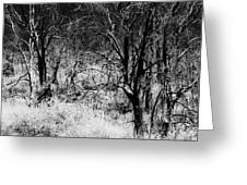 Ghostly Forest Greeting Card