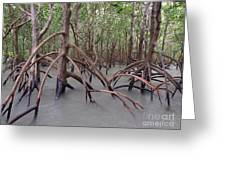 Ghostly Mangroves Greeting Card