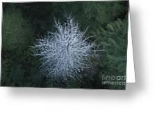 Ghost Tree Greeting Card