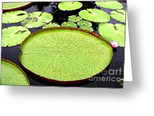 Giant Amazon Lily Pads Greeting Card