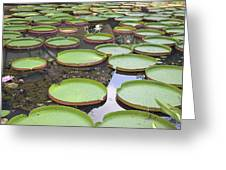 Giant Amazonian Water Lily Pads Greeting Card
