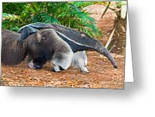 Giant Anteater Mother And Baby Greeting Card