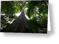 Giant Cashew Tree Amazon Rainforest Brazil Greeting Card