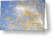 Giant Feather Grass Greeting Card by Tim Gainey