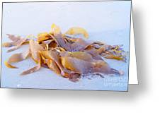 Giant Kelp Washed Ashore Greeting Card
