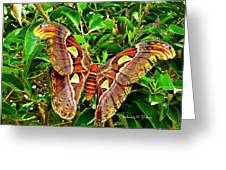 Giant Moth Greeting Card