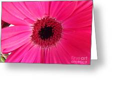 Flower Photography - Giant Pink Gerbera Daisy Greeting Card