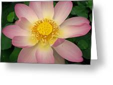 Giant Pink Lotus Greeting Card