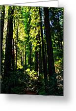 Giant Redwood Forest Greeting Card