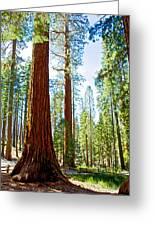Giant Sequoias In Mariposa Grove In Yosemite National Park-california Greeting Card